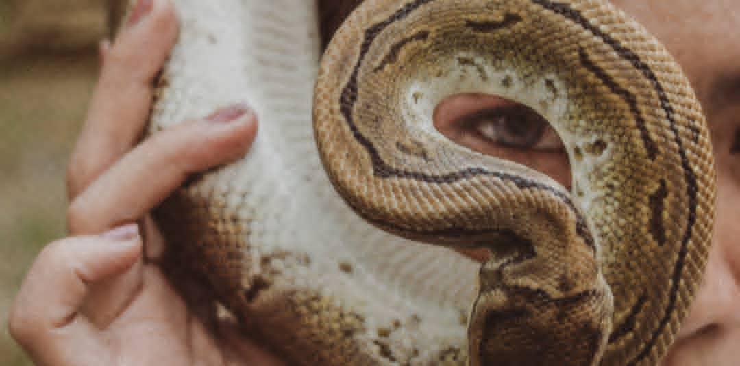 Símbolos Psicodramáticos: La Serpiente… ¿Veneno o Medicina?